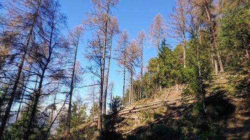 Unterbäch im Waldstück »Hohegga-Capetsch»